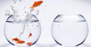 peixe e aquerio